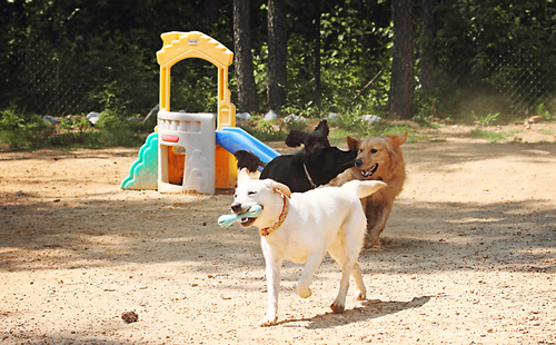 Dog playing at the Pampered Pet Resort